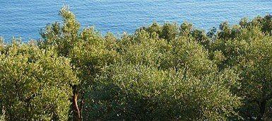 B&B Dolceacqua - vista dalla collina